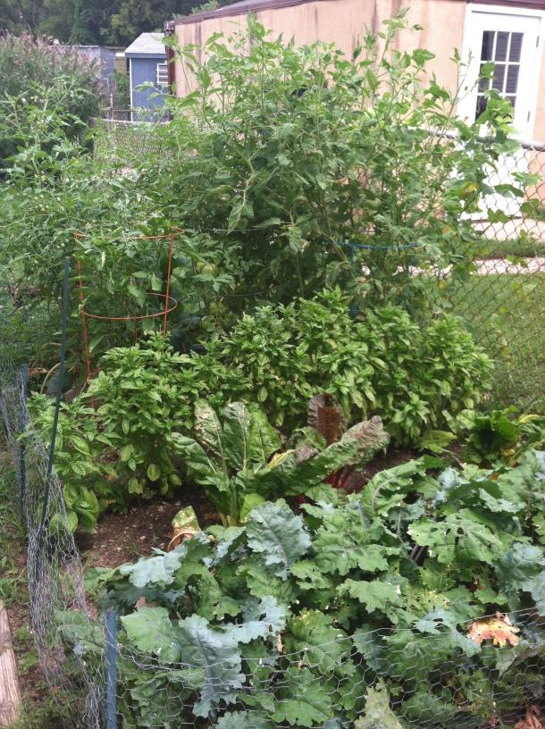 Veggie Garden in July