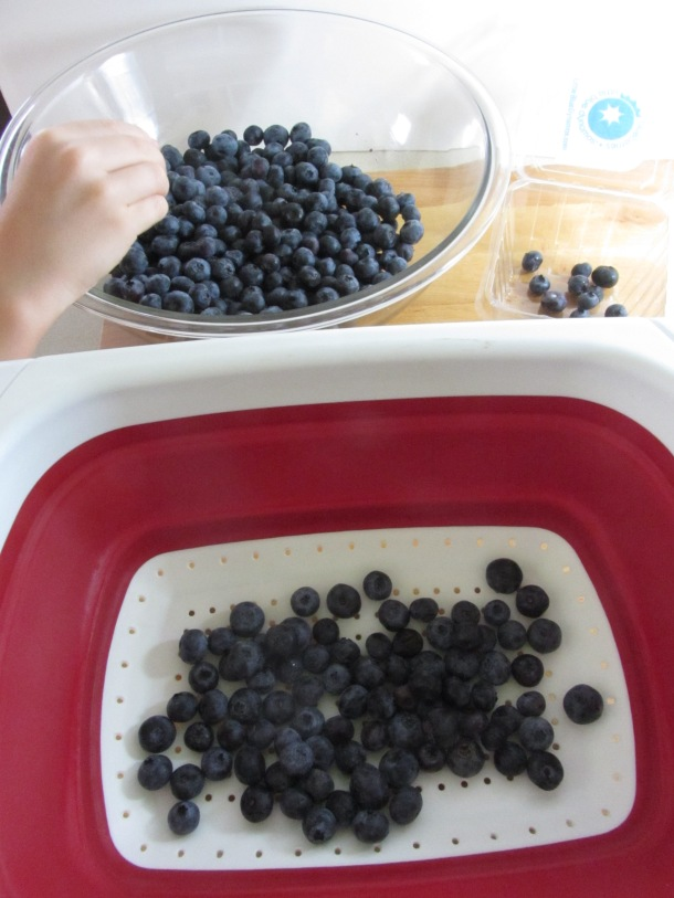sort and clean the blueberries