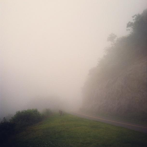 Foggy Path by Rachel Walker