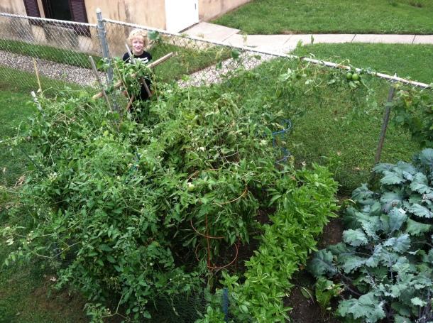 garden in septemeber