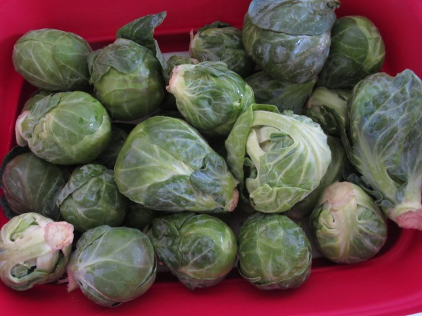 wash the brussel sprouts