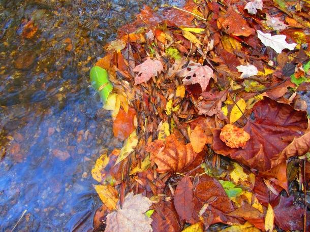 Fallen leaves in the stream