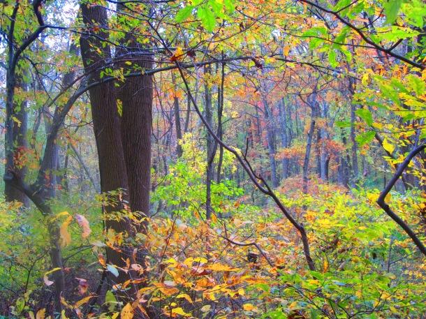infinite woods