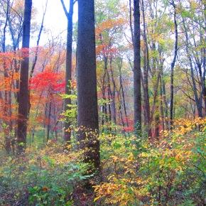 Fall is my FavoriteSeason
